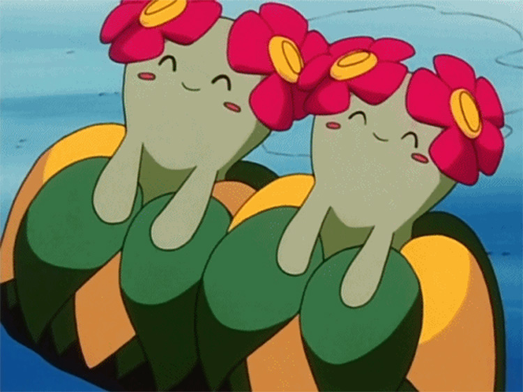 Bellossom in the anime