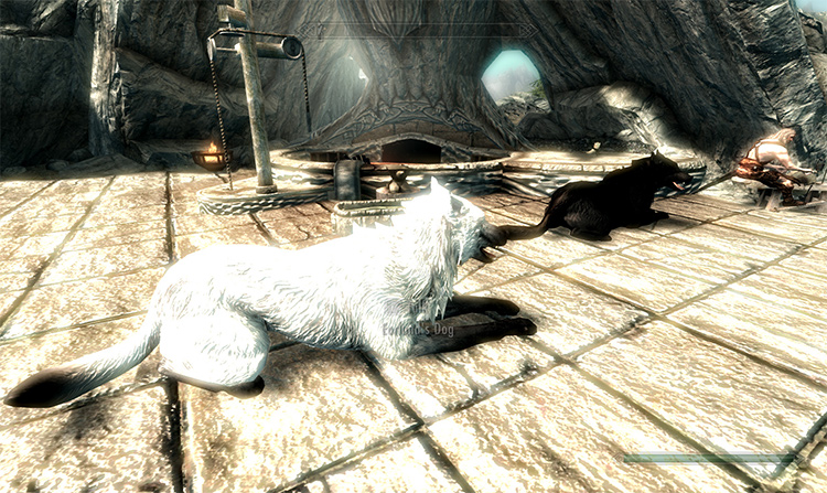 Dogs of Skyrim Skyrim