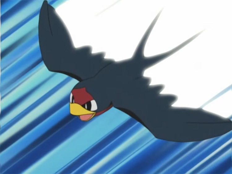 Taillow in the anime