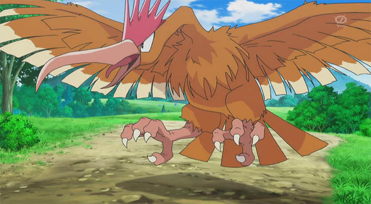 Fearow in the anime