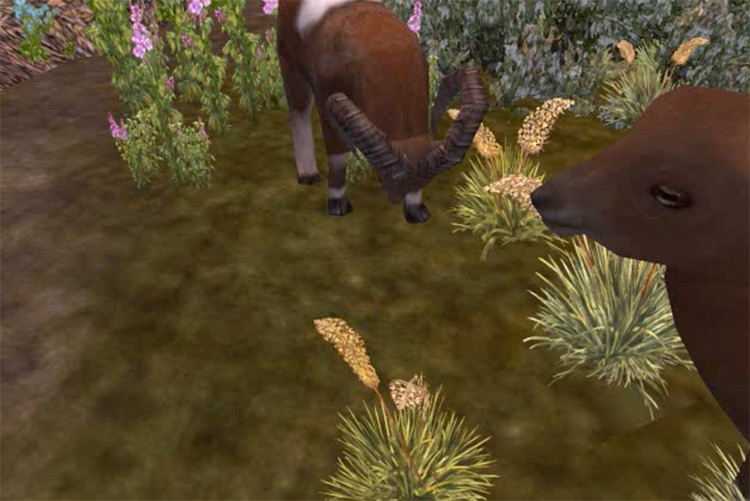 European Expeditions Zoo Tycoon 2 mod