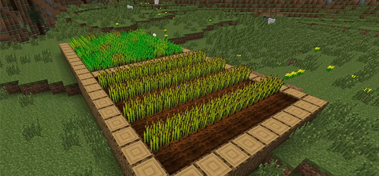 Minecraft food growing on a farm