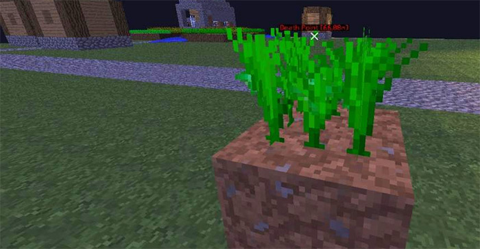 Carrot growing in Minecraft