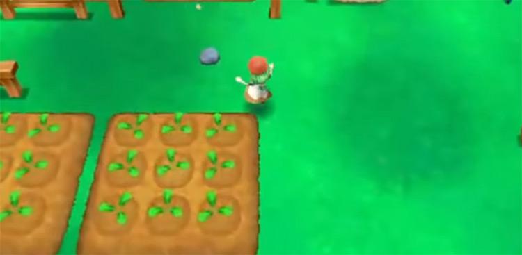 Story of Seasons 2015 game screenshot