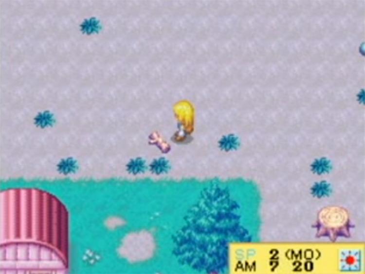 Harvest Moon DS Cute screenshot