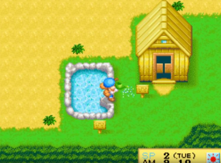 Harvest Moon DS screenshot